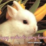 cute-bunny easter