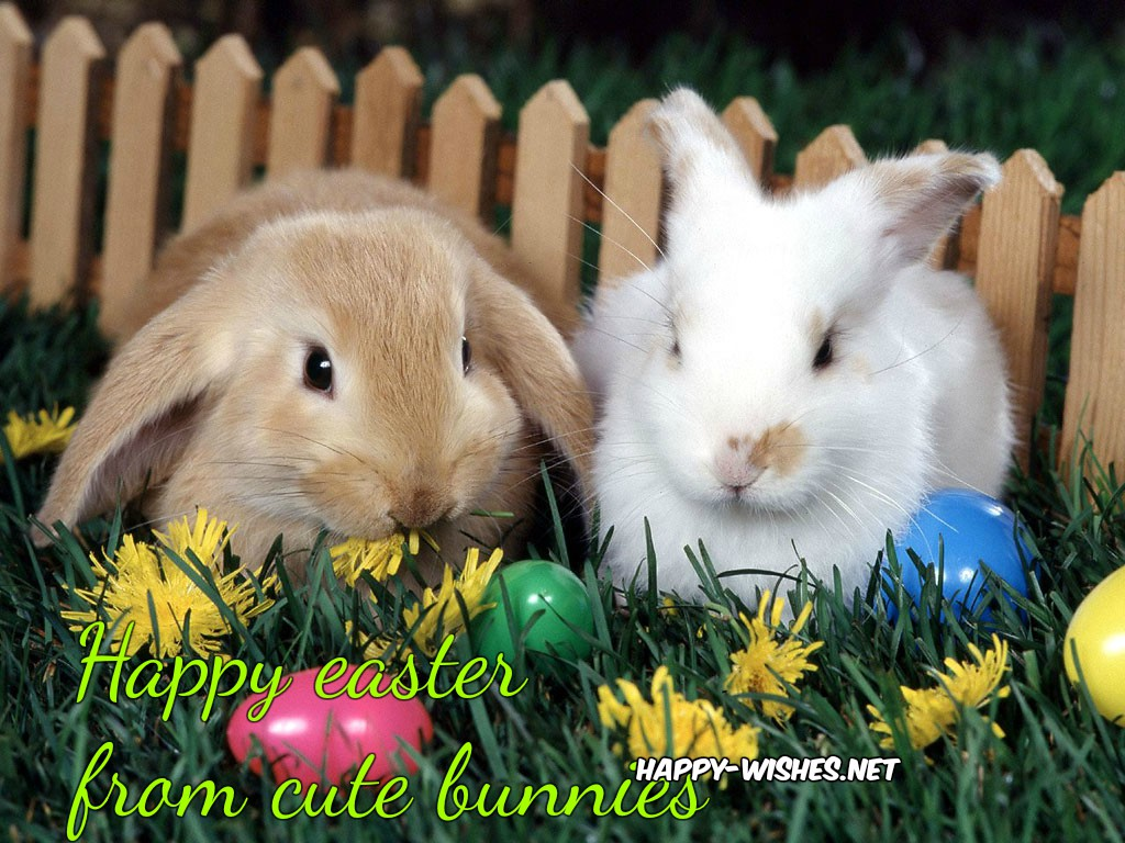 cute-easter-bunny-