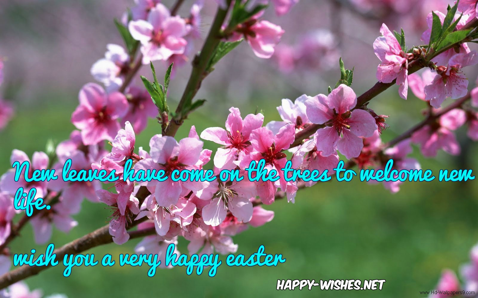 easter-spring-quotes