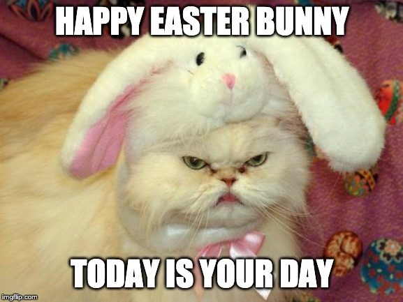 Happy easter bunny today is your day