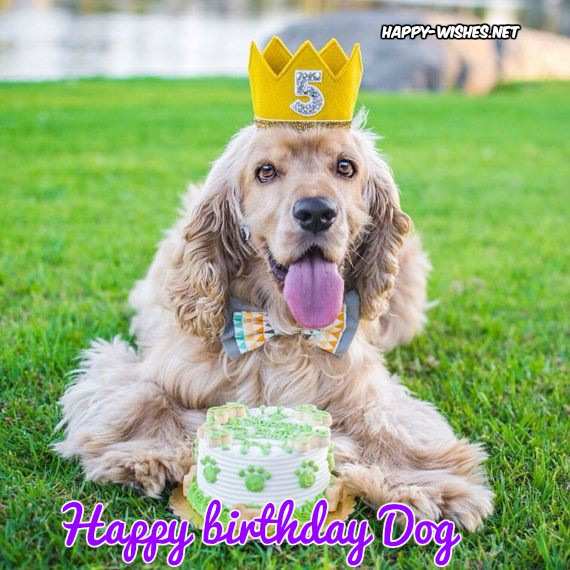 Happy Birthday Wishes For Dog - Quotes, Images & Memes
