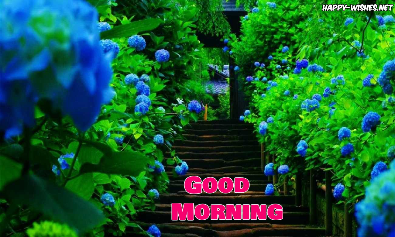 Good Morning-Nature Images