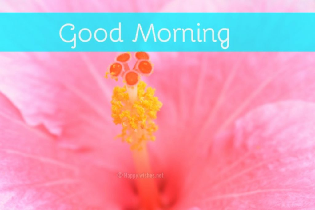Best Good Morning Wishes Pink Flower Background