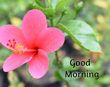 Good Morning Wishes With Pink Flower Images
