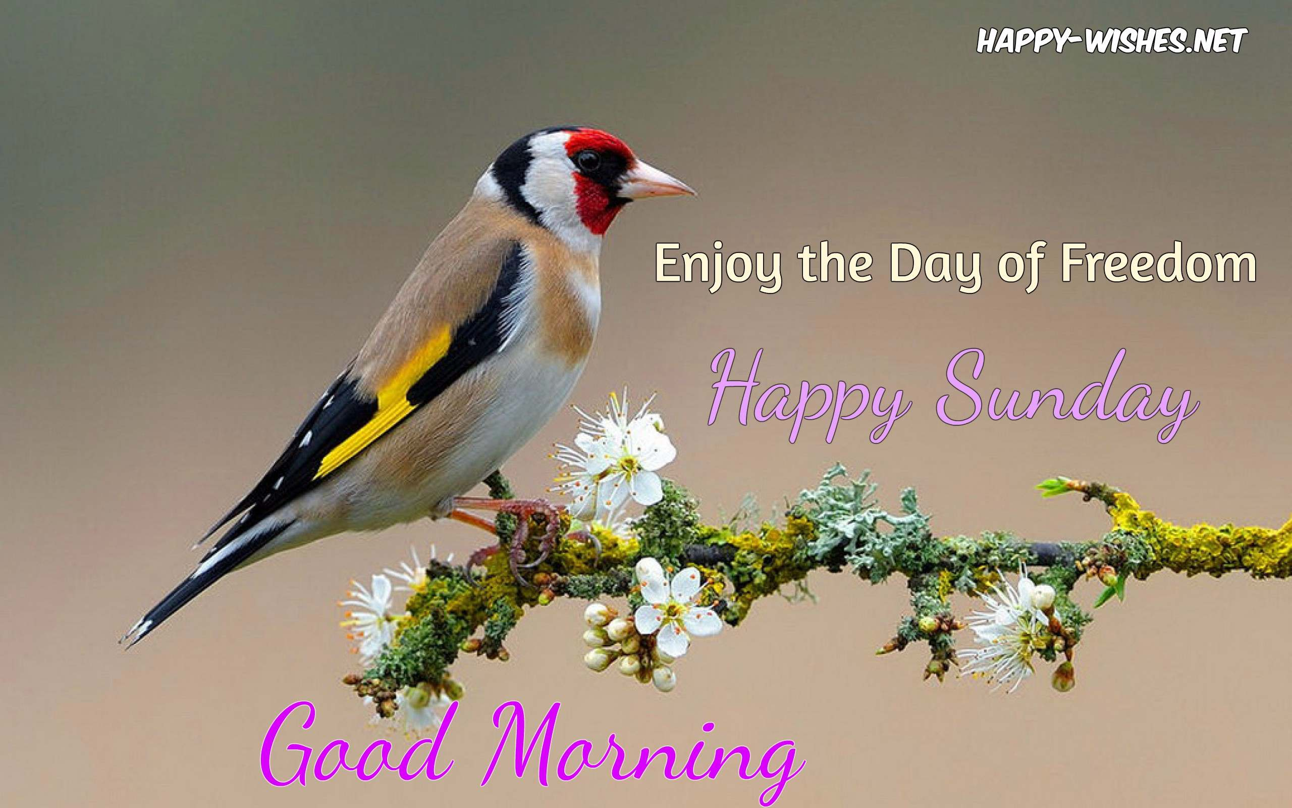 Good Morning Wishes On Sunday - Quotes , Images and Pictures