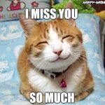 best I miss you meme for love