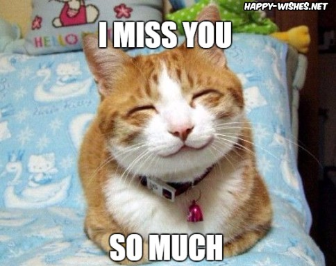 best I miss you meme for love