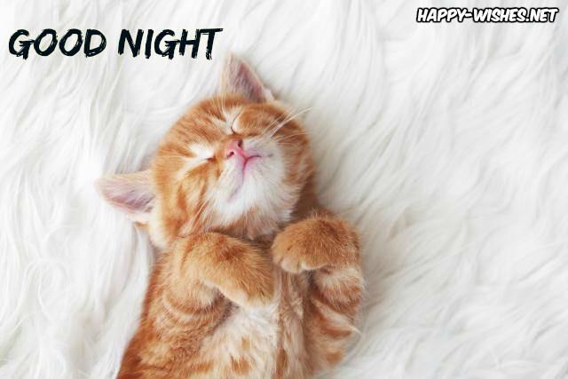 Funny good night sleeping kitten images