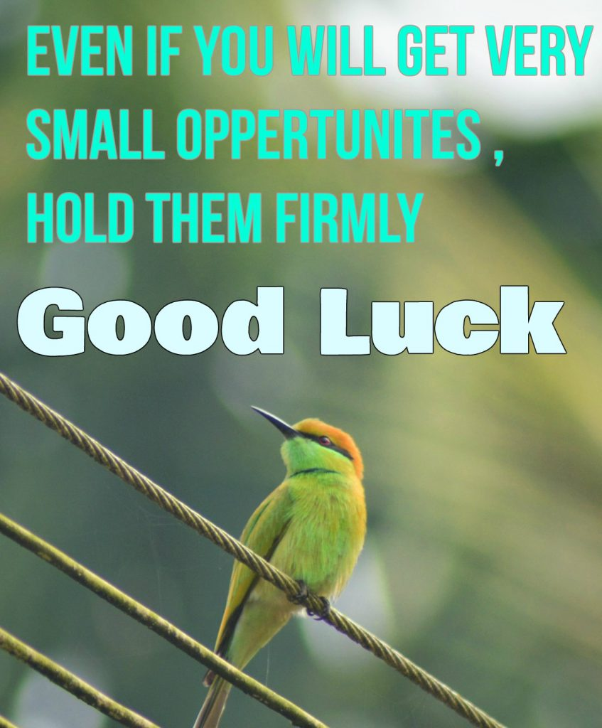 Good Luck Wishes With Bird Images