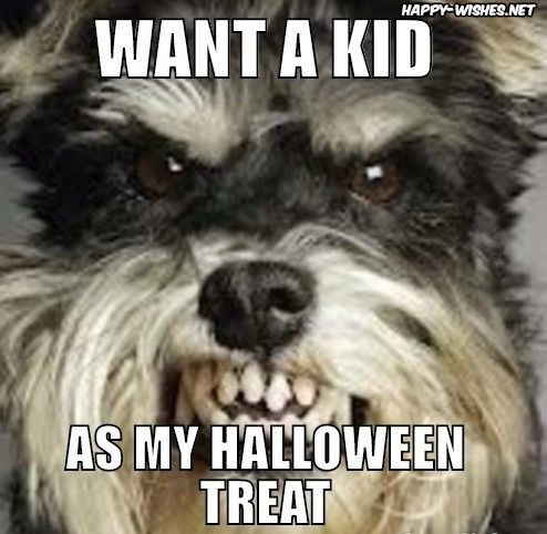 Best Funny halloween memes
