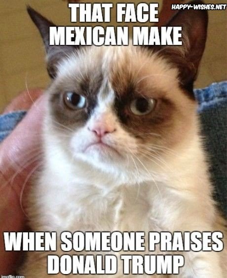 Mexican Cats Memes