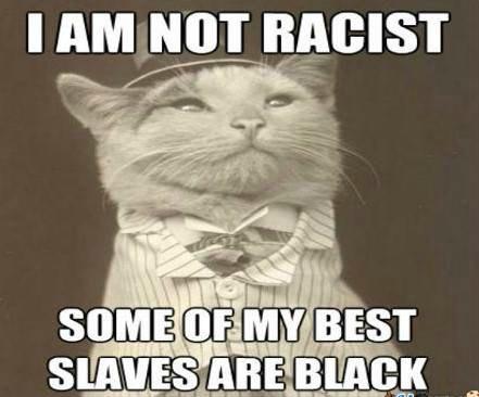 Sarcastic white cat Racist Memes