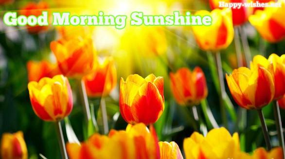 Beauti ful Good morning sun shine images
