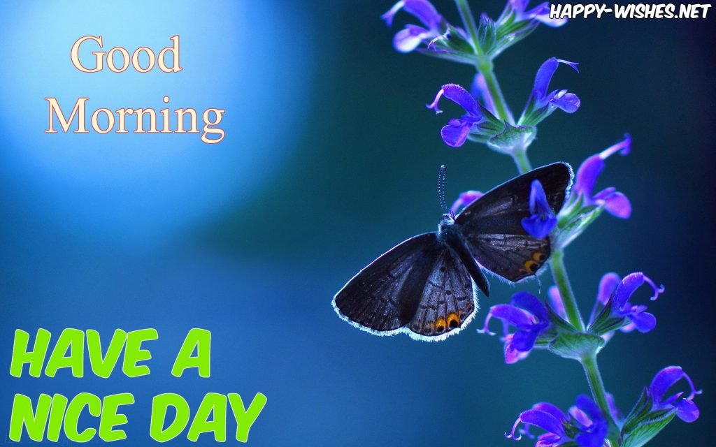 Beautiful Butterfly Good Morning Images