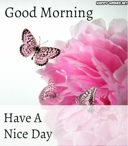 Beautiful Pink Butterflies Good Morning Images
