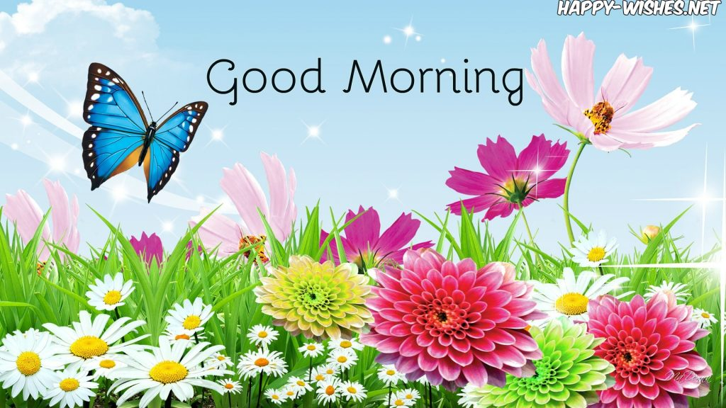Beautiful good morning wishes With Butterfly images