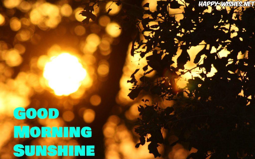 Beautiful morning sun shine images -