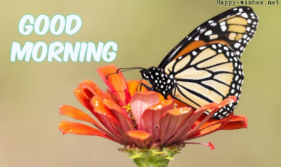 Best Good Morning wishes with Butterfly images