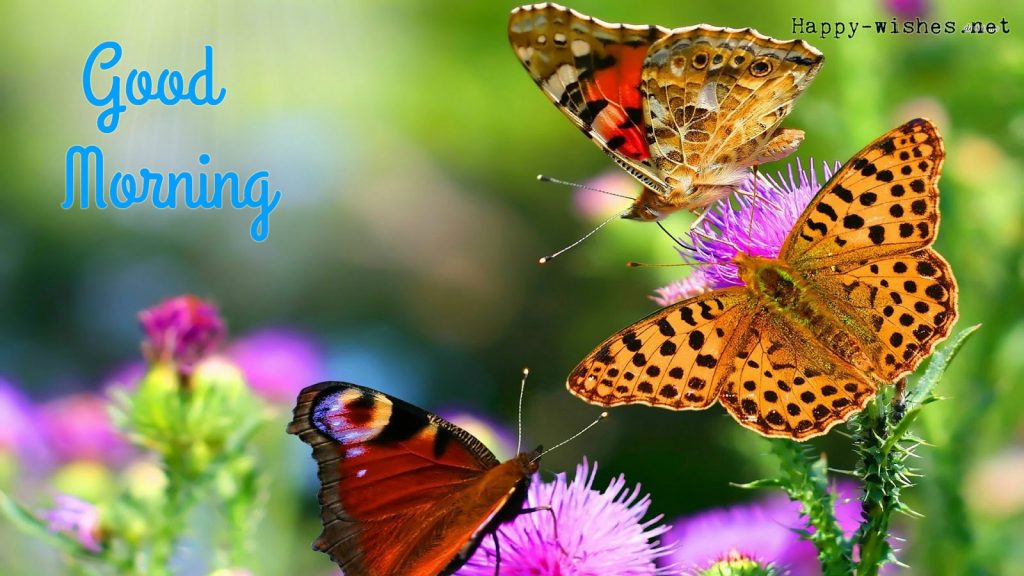 Best Good morning wishes with Butterflies