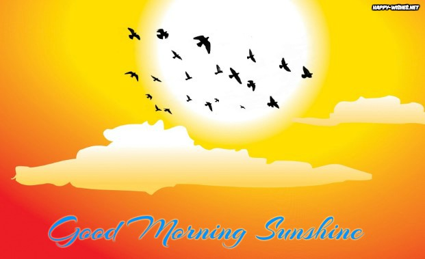 Birds flying the sky Good morning sun shine images - Copy