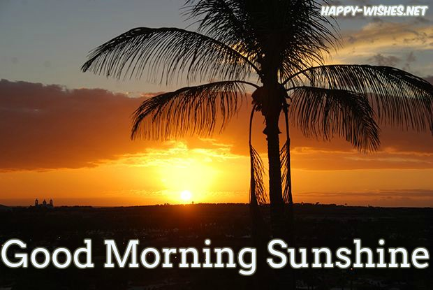 Coconut tree Sunshine Good morning Images - Copy