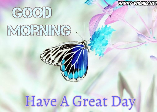 Cute Butterfly Good Morning Images