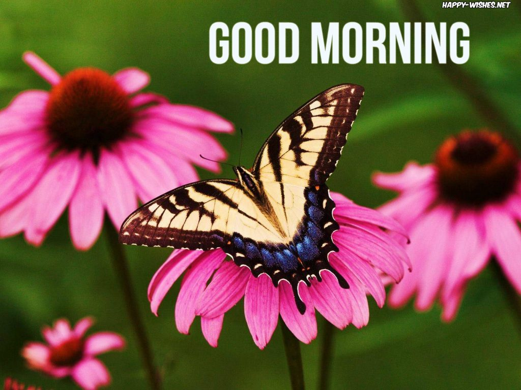 Flowers butterfly natural Good Morning wishes