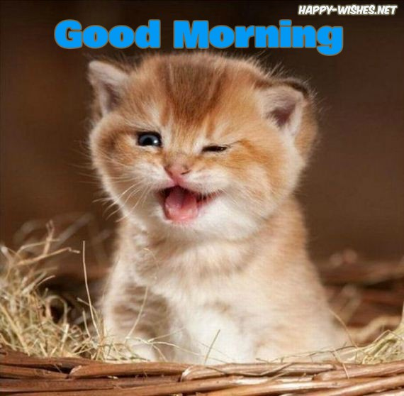 40 Good Morning Wishes For Cat Lovers Images Pictures