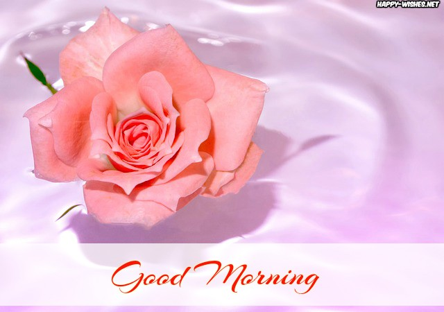 Good Morning Roses images