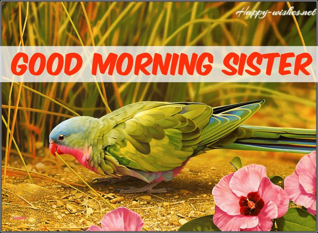 Good Morning Sister wishes with beautiful bird images