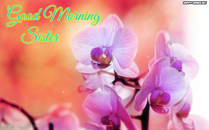 Good Morning Sister with Orchid Flower Backgrounds