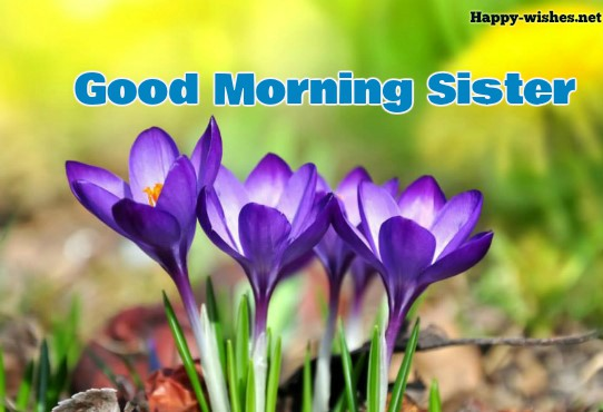 Good Morning Sister with beautiful background images