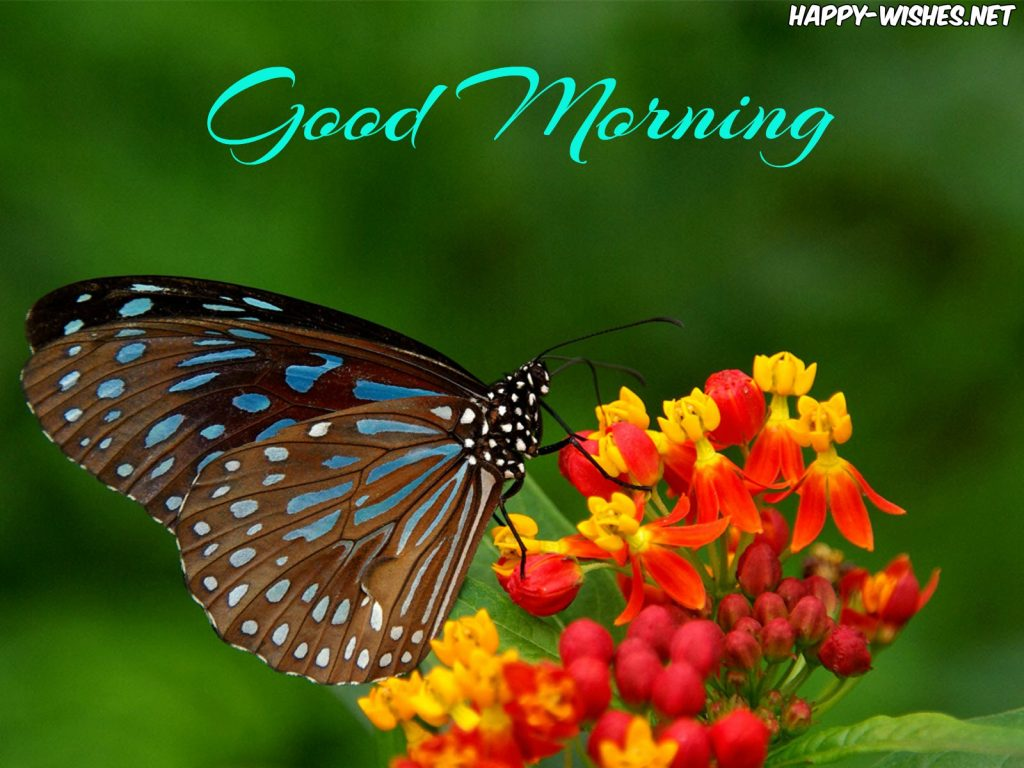 Good Morning Wishes Beautiful Butterfly images