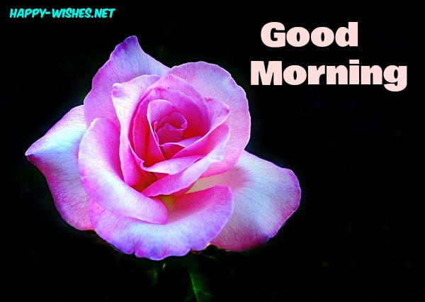 Good Morning Wishes With Rose Pictures