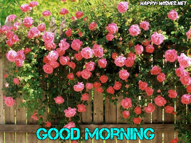 Good Morning Wishes With Rose Tree Pictures