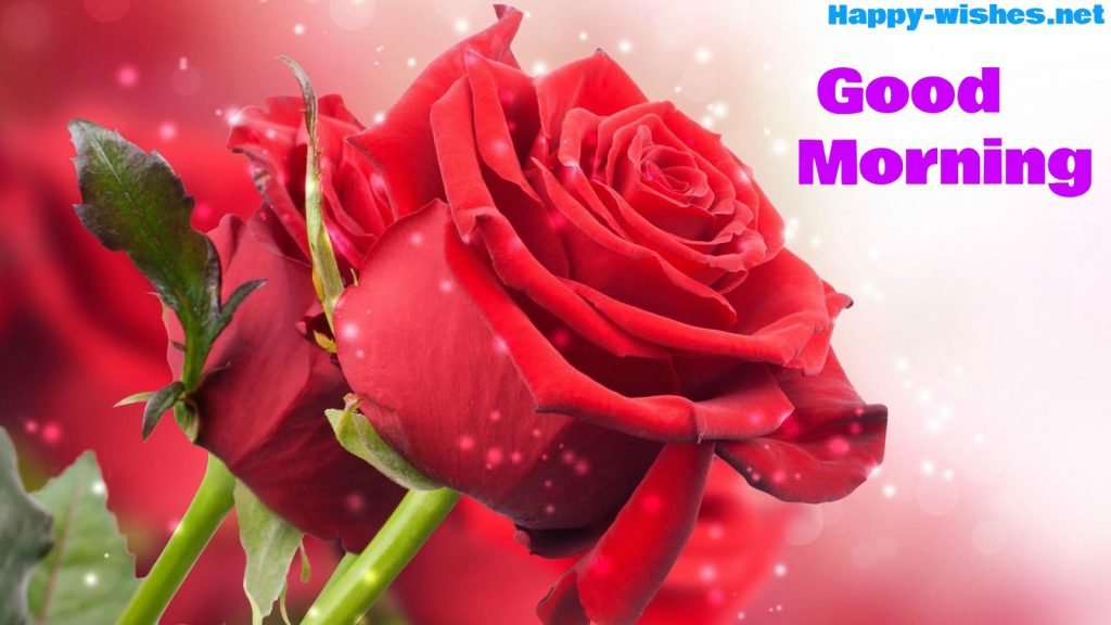 Good Morning Wishes With Singel Rose Pictures
