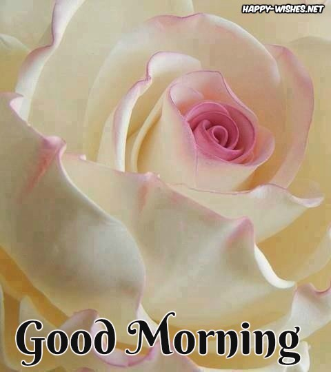 Good Morning Wishes With White Rose Pictures