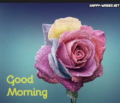 Good Morning Wishes With colourful Rose Pictures