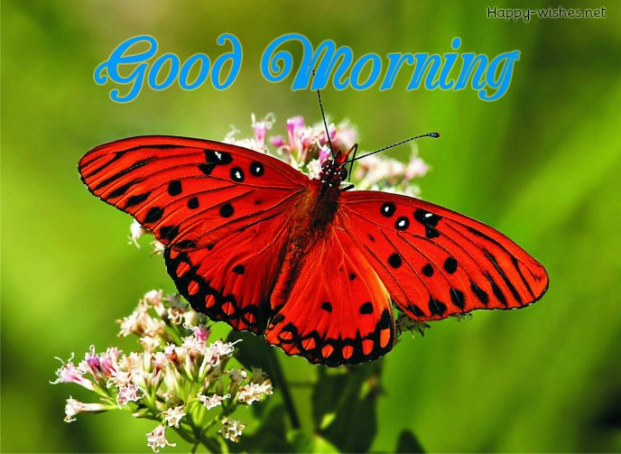 Good Morning Wishes with Red Butter fly images