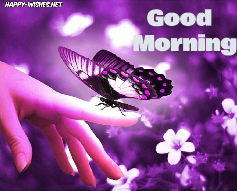 Good Morning Wishes withButterfly Background images