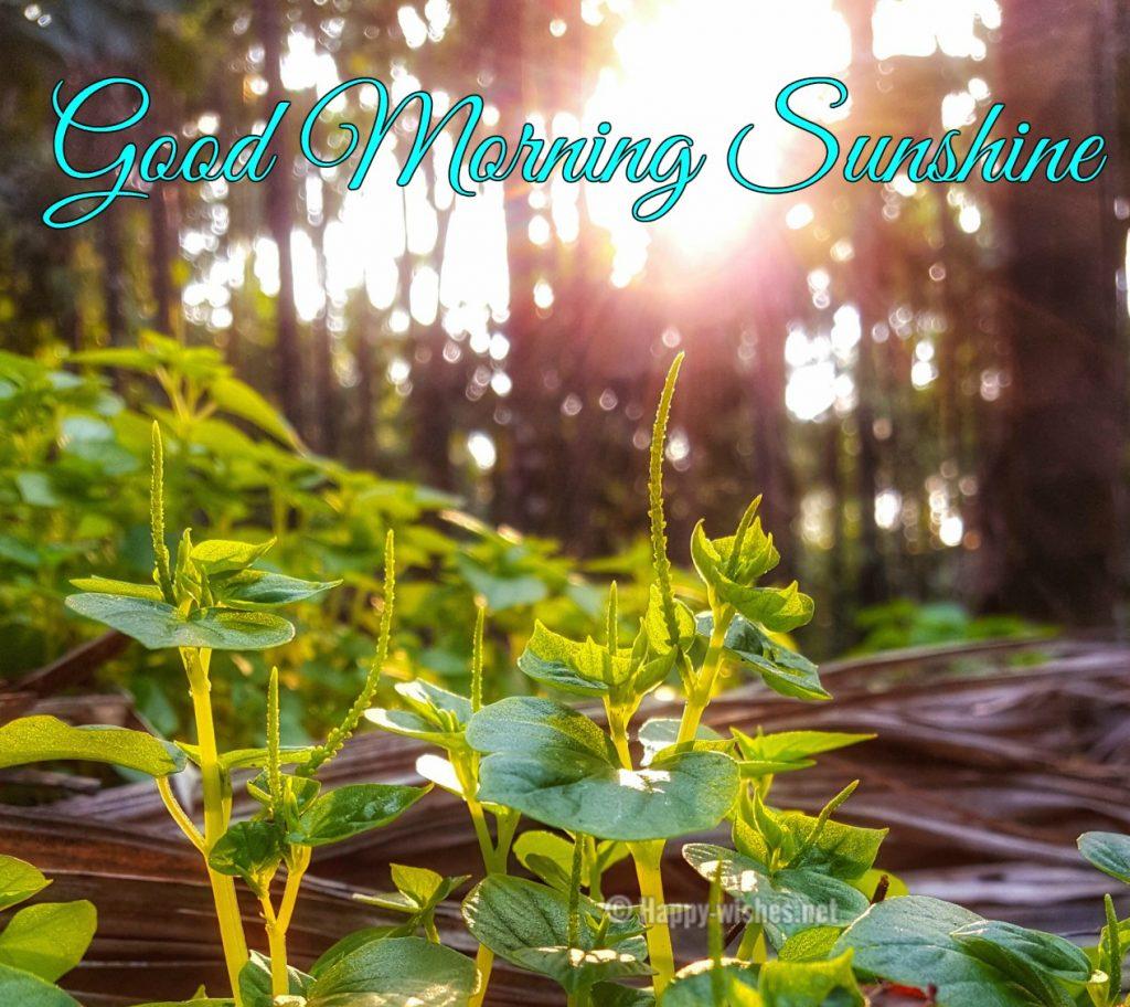 Good Morning sunshine photos