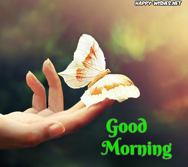 Good Morning wishes with Butterfly on Hand image