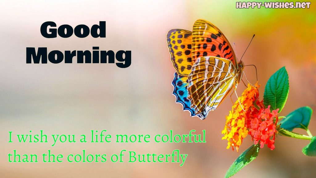 Good Morning wishes with Orange Butterfly Images