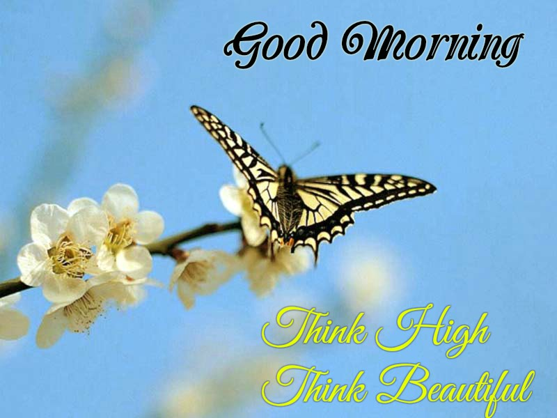 Good Morning wishes with nice Butterfly images