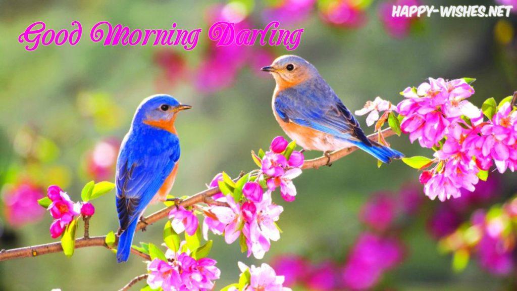 Good morning Darling images bird images