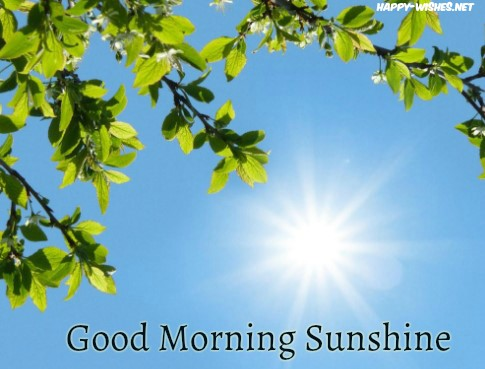 Good morning Sun shine wishes throuugh the tree