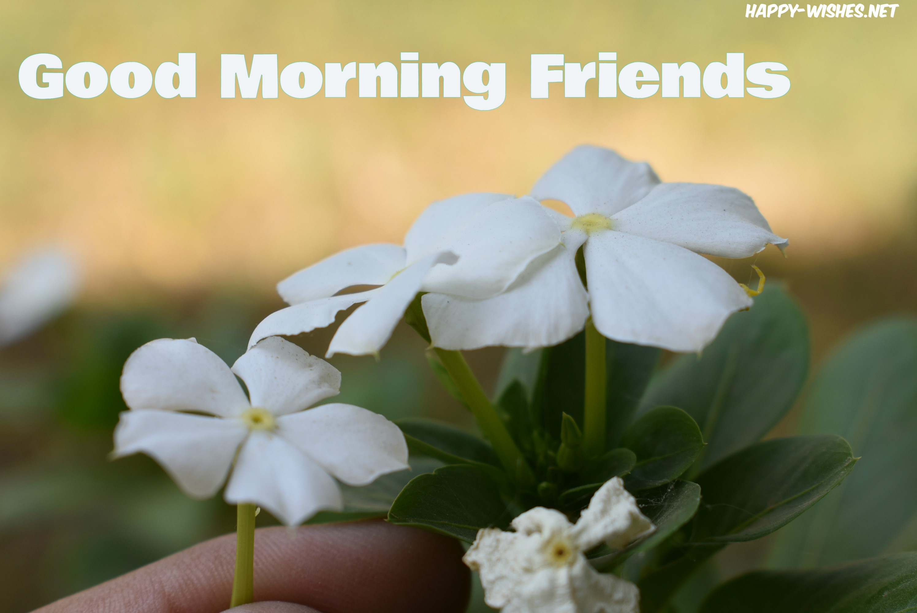 98+ Good Morning Wishes For Friends - Quotes & Messages