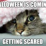 Funny Cat Halloween emes