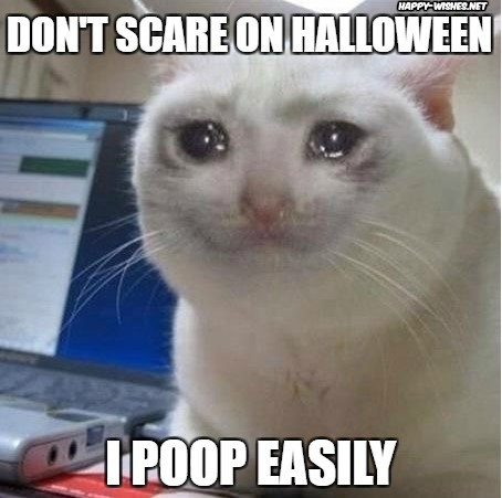 Fearfull cat on Halloween images