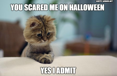 Happy Halloween cats memes wishes